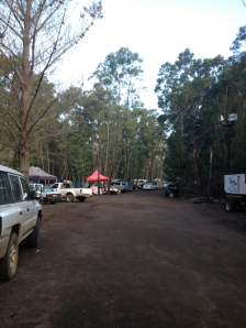 Ramfest Camping Trees